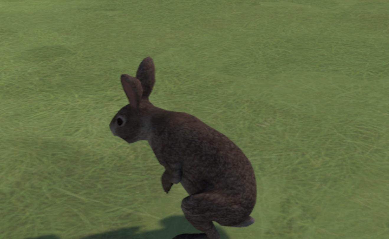 Bunny in Somnium Space